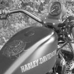 Harley Davidson Sporster Epona, motifs et caractères celtic sur le réservoir