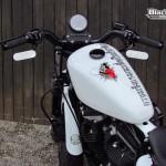 Harley Davidson Sporster Thai, Calimero fait de la boxe !